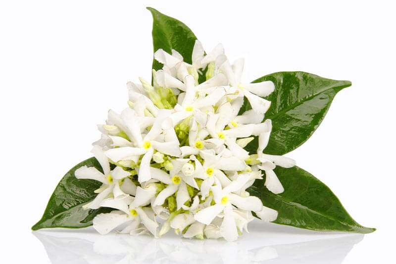5 Benefits & Uses of Neroli Essential Oil (Plus 5 Recipes, Application Tips & General FAQ)