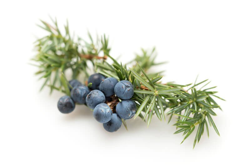 10 Juniper Berry Essential Oil Benefits & Uses (Plus 5 Recipes and General FAQ)
