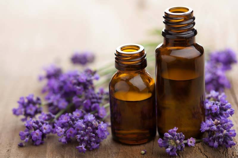 lavender oil for spider bug mosquito bites