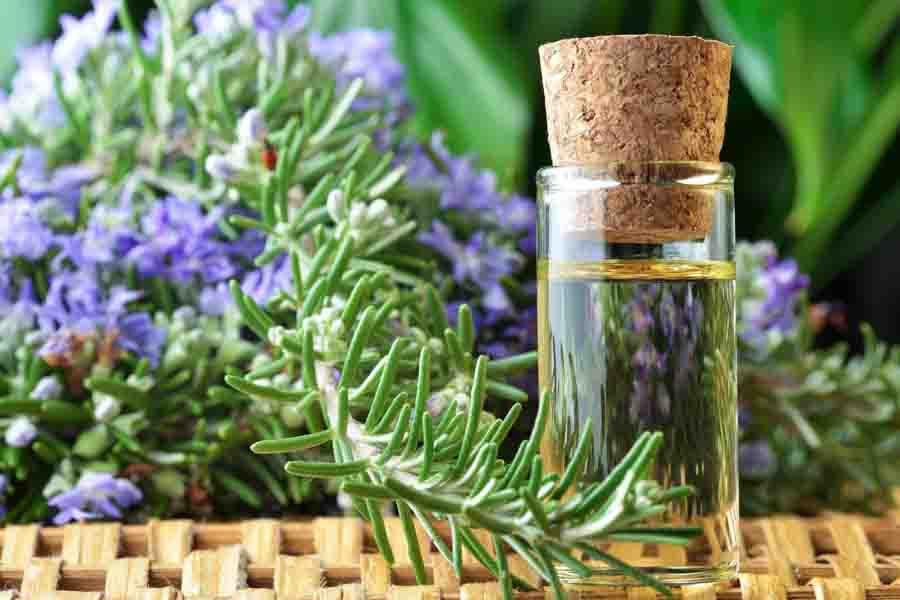rosemary essential oil bottle