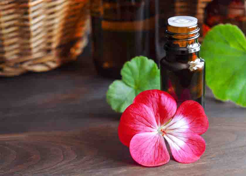 19 Geranium Essential Oil Uses and Benefits (Plus 8 Recipes, Application Tips and General FAQs)
