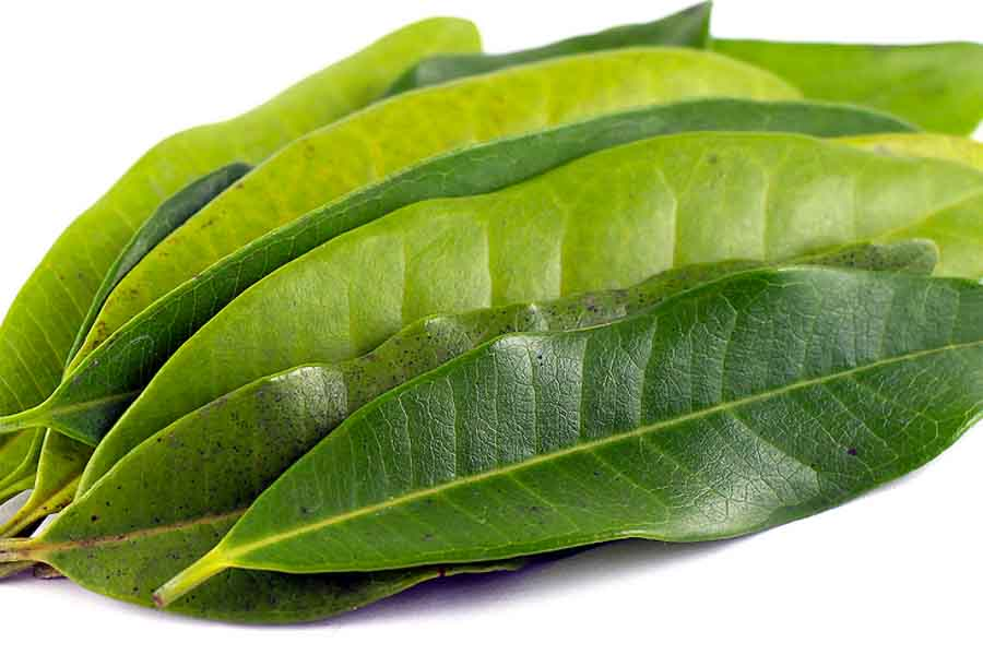 west-indian-bay-leaf-essential-oil